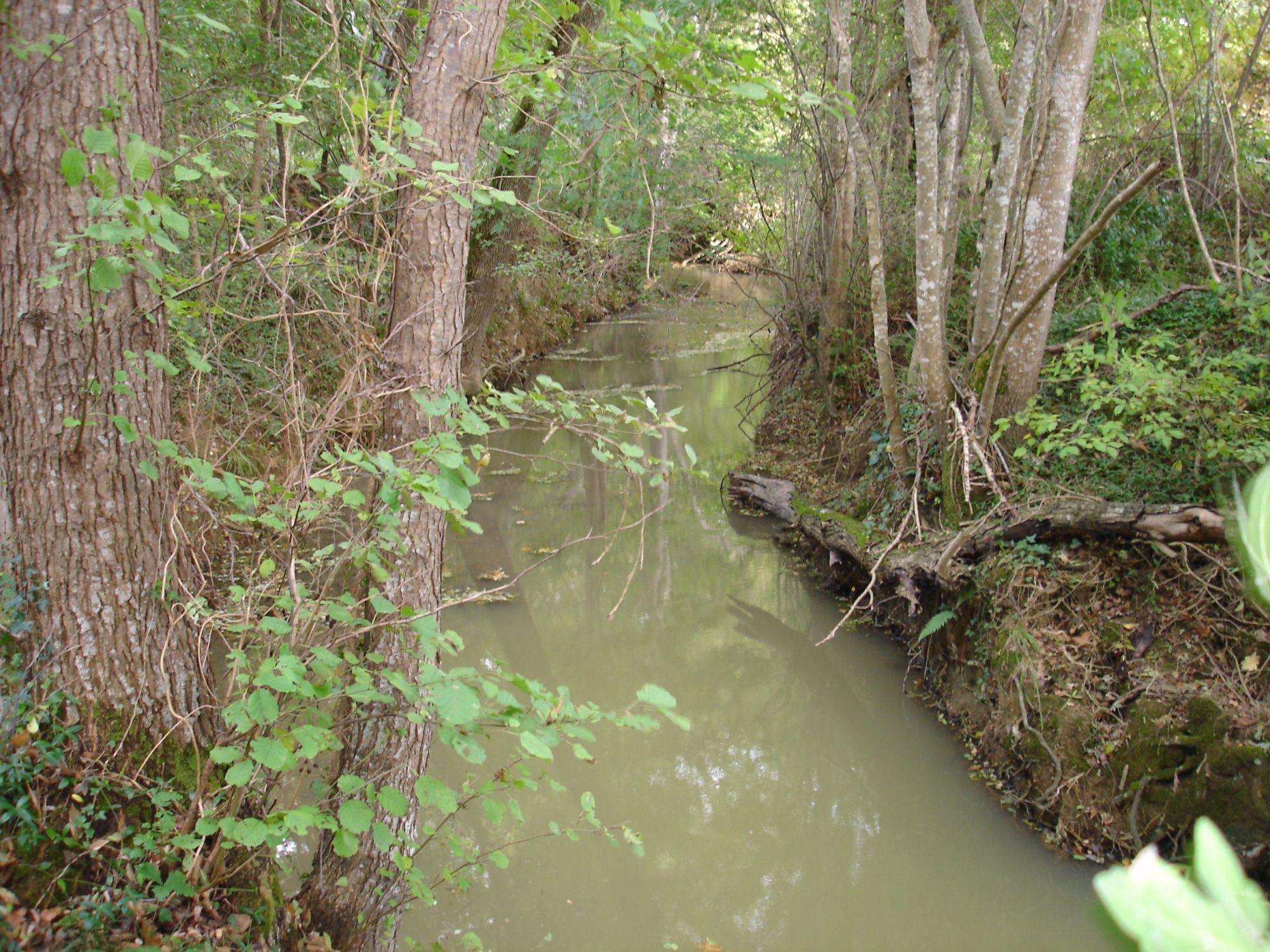 ruisseau-de-la-saudrune