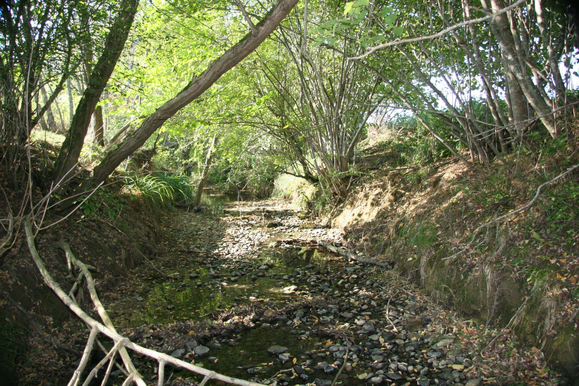 ruisseau-de-la-saverette