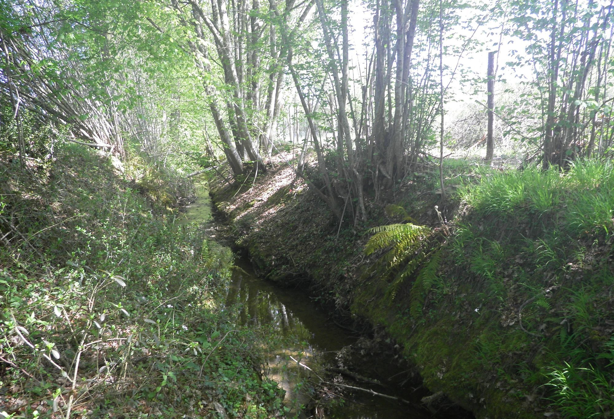 ruisseau-de-layguebelle