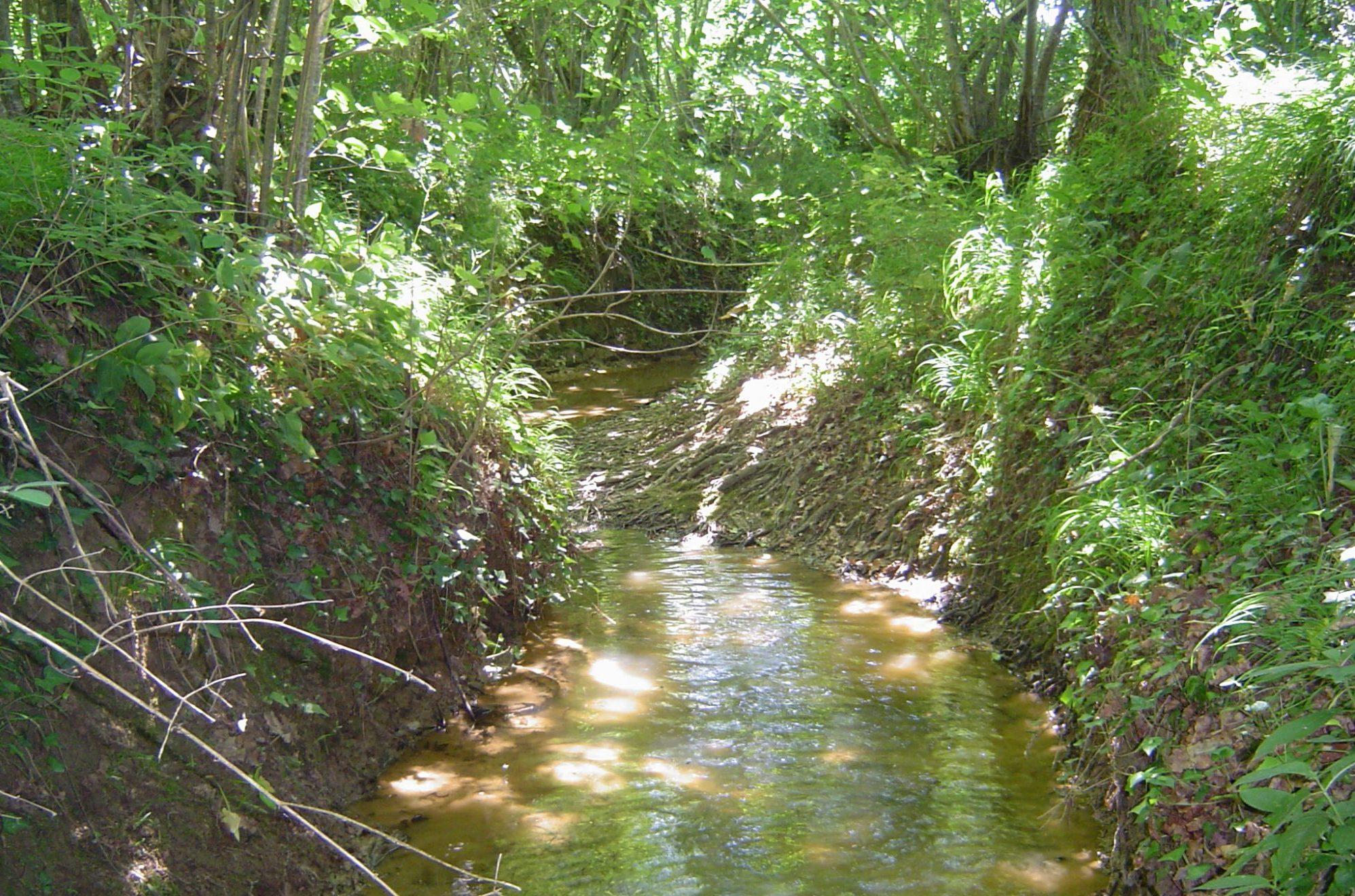 ruisseau-du-bras