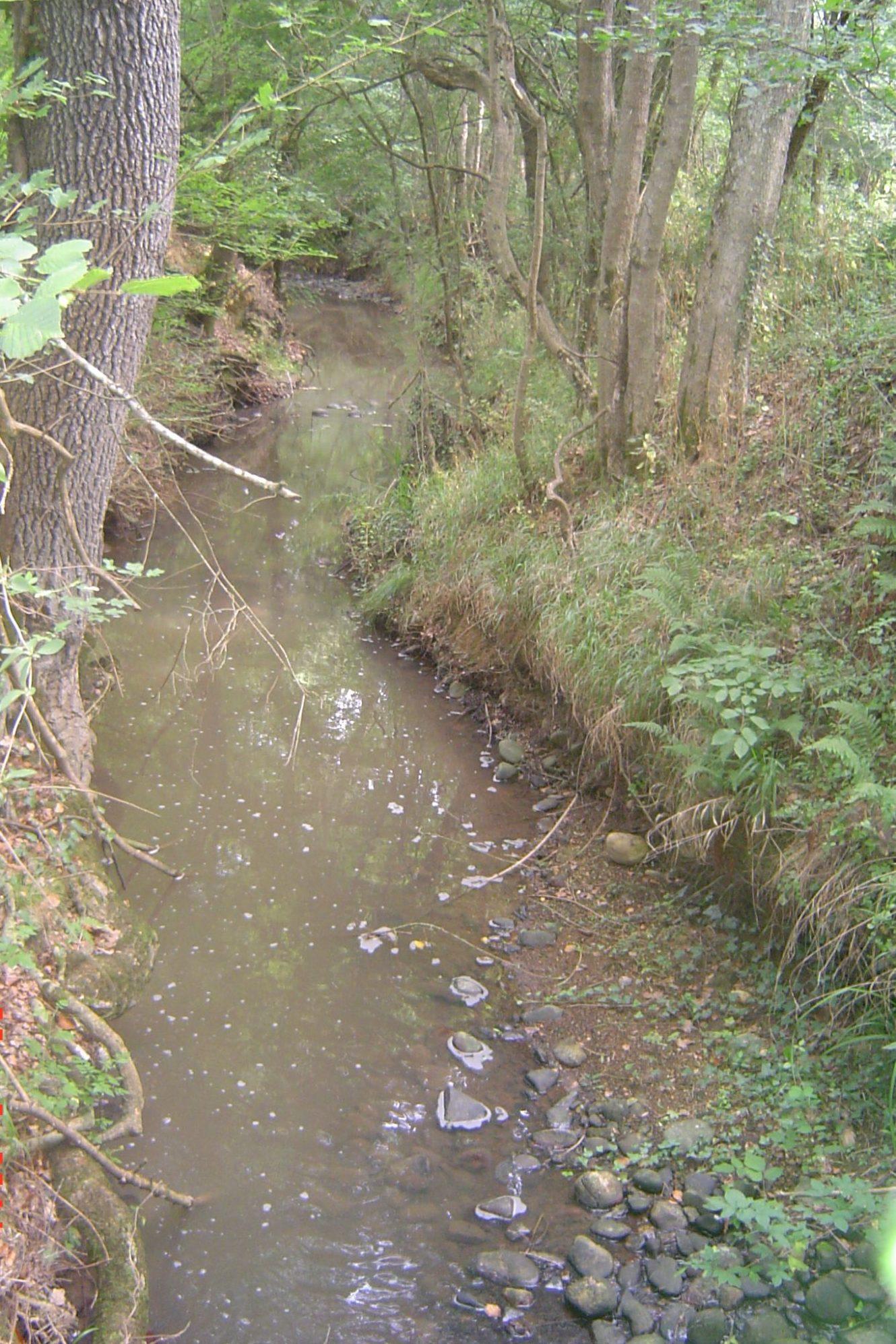 ruisseau-du-montaut