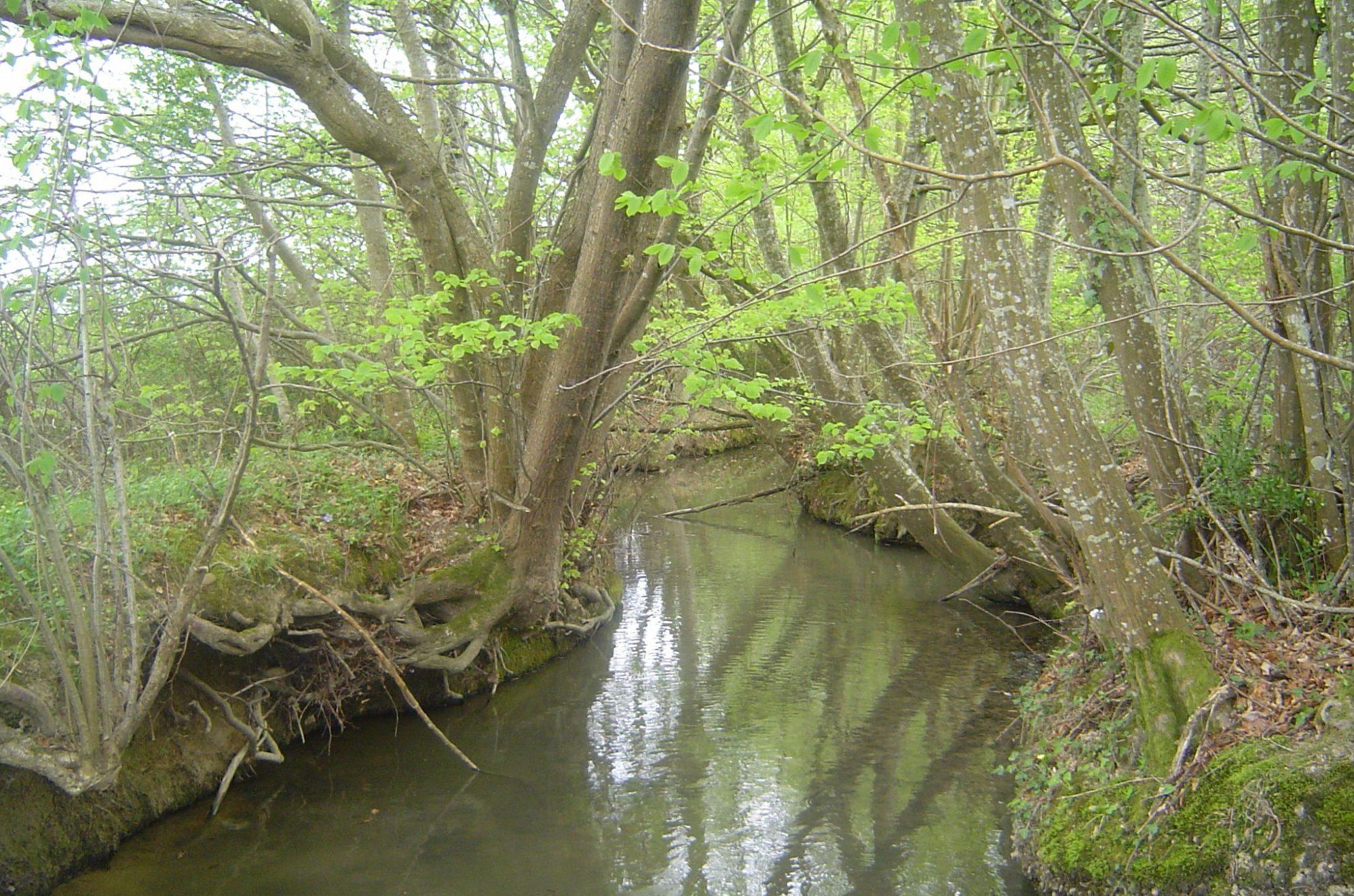 ruisseau-du-rieu-ferre